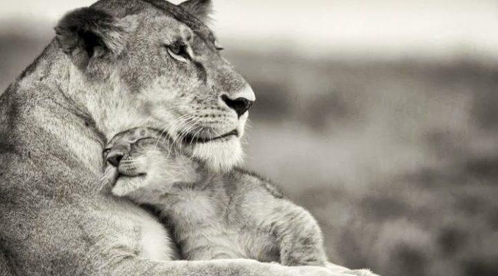 Ser mulher, mãe e empreendedora em um mundo de leões